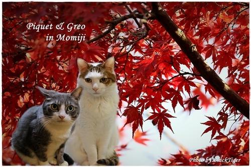 momiji2-3.jpg